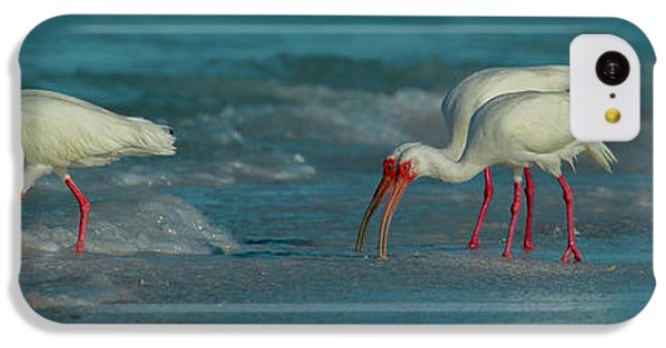 Ibis iPhone 5c Case - Blues Trio Cortez Beach by Betsy Knapp