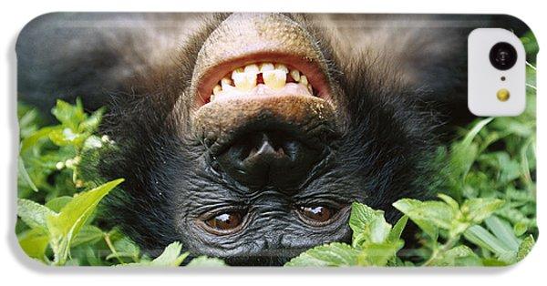 Bonobo Pan Paniscus Smiling IPhone 5c Case