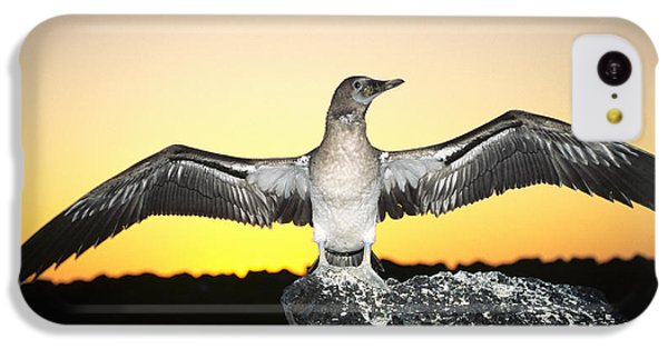 Booby At Sunset IPhone 5c Case by Dave Fleetham - Printscapes