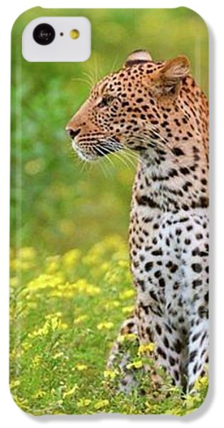 Botswana Leopard  IPhone 5c Case by Happy Home Artistry
