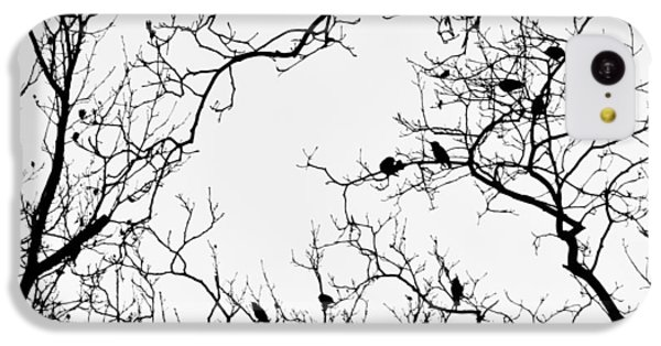 Branches And Birds IPhone 5c Case by Sandy Taylor