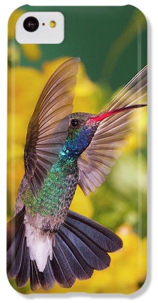 Humming Bird iPhone 5c Case - Broad-bill Pose by Janet Fikar