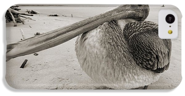 Pelican iPhone 5c Case - Brown Pelican Folly Beach Morris Island Lighthouse Close Up by Dustin K Ryan