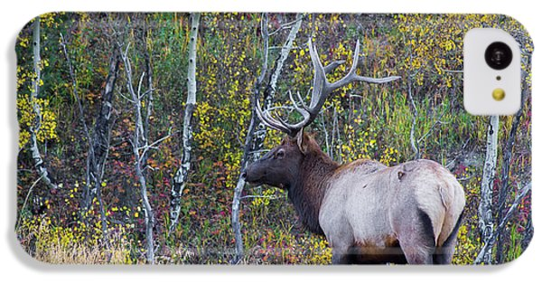 IPhone 5c Case featuring the photograph Bull Elk by Aaron Spong