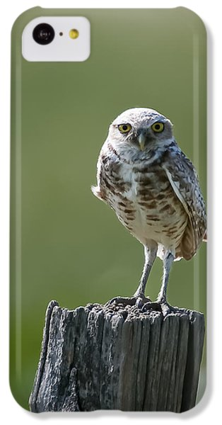IPhone 5c Case featuring the photograph Burrowing Owl by Gary Lengyel
