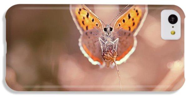 Butterfly Beauty IPhone 5c Case