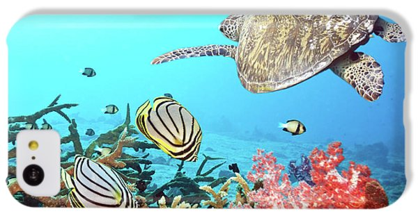 Butterflyfishes And Turtle IPhone 5c Case by MotHaiBaPhoto Prints