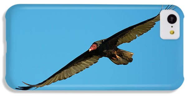 Buzzard iPhone 5c Case - Buzzard Circling by Mike Dawson