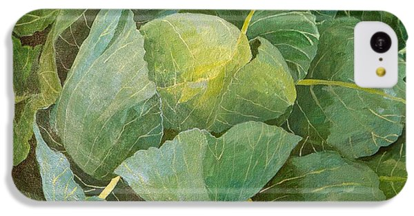 Cabbage IPhone 5c Case by Jennifer Abbot