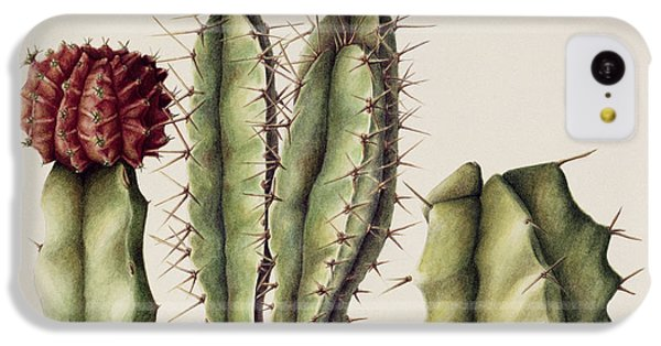 Desert iPhone 5c Case - Cacti by Annabel Barrett