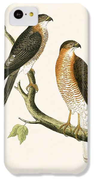 Calcutta Sparrow Hawk IPhone 5c Case by English School