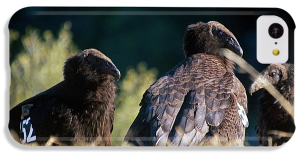 California Condors IPhone 5c Case
