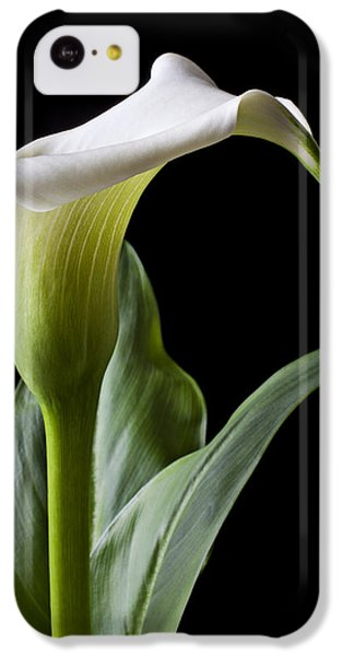 Calla Lily With Drip IPhone 5c Case by Garry Gay