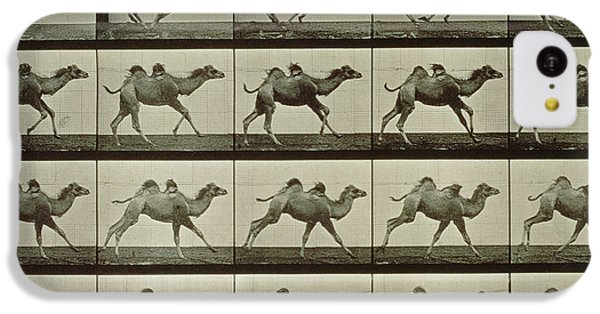 Desert iPhone 5c Case - Camel by Eadweard Muybridge