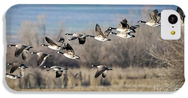 Canada  Geese Flock IPhone 5c Case by Mike Dawson
