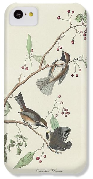 Canadian Titmouse IPhone 5c Case by Rob Dreyer