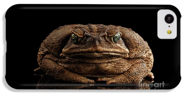 Cane Toad - Bufo Marinus, Giant Neotropical Or Marine Toad Isolated On Black Background, Front View IPhone 5c Case