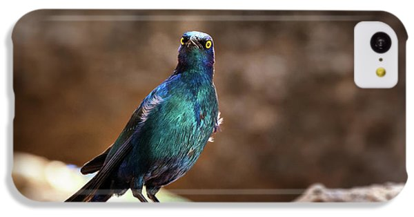 Starlings iPhone 5c Case - Cape Glossy Starling by Jane Rix