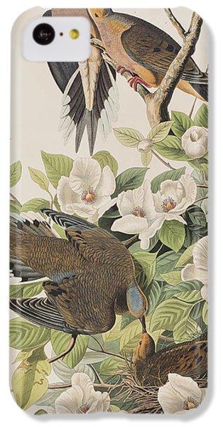 Carolina Turtle Dove IPhone 5c Case by John James Audubon