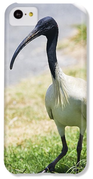 Carpark Ibis IPhone 5c Case by Jorgo Photography - Wall Art Gallery
