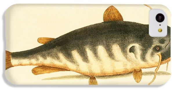 Catfish iPhone 5c Case - Catfish by Mark Catesby