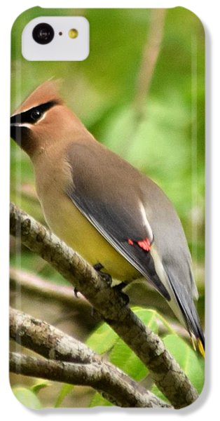 Cedar Wax Wing 1 IPhone 5c Case by Sheri McLeroy