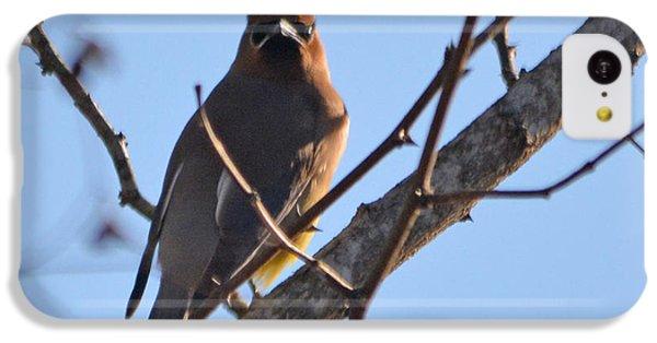 Cedar Waxing iPhone 5c Case - Cedar Wax Wing On The Lookout by Barb Dalton