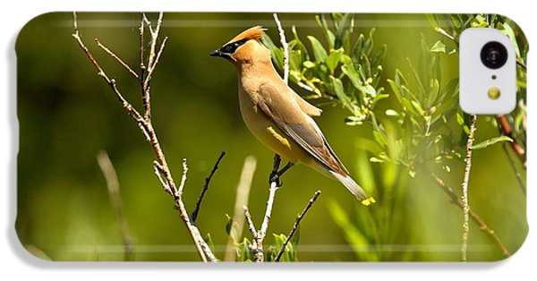 Cedar Waxwing At Glacier IPhone 5c Case by Adam Jewell