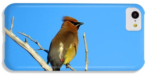 Cedar Waxwing IPhone 5c Case by Dianne Cowen