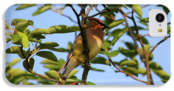Cedar Waxwing IPhone 5c Case by Mark A Brown