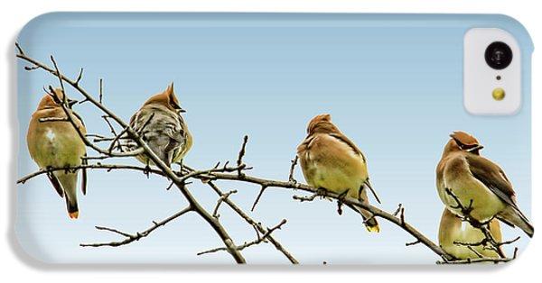 Cedar Waxing iPhone 5c Case - Cedar Waxwings by Geraldine Scull