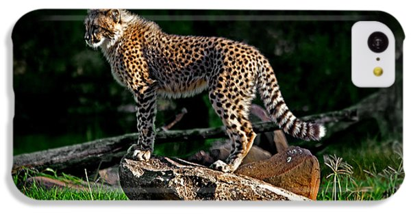 Cheetah Cub Finds Her Pride Rock IPhone 5c Case by Miroslava Jurcik