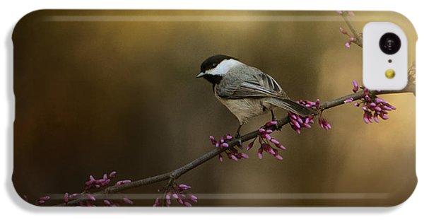 Chickadee In The Golden Light IPhone 5c Case by Jai Johnson