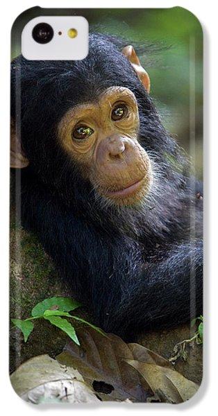 Chimpanzee Pan Troglodytes Baby Leaning IPhone 5c Case