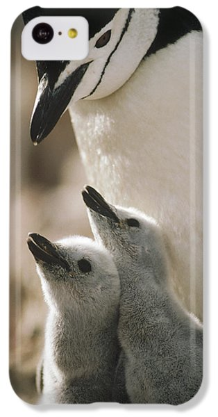 Chinstrap Penguin Pygoscelis Antarctica IPhone 5c Case by Tui De Roy