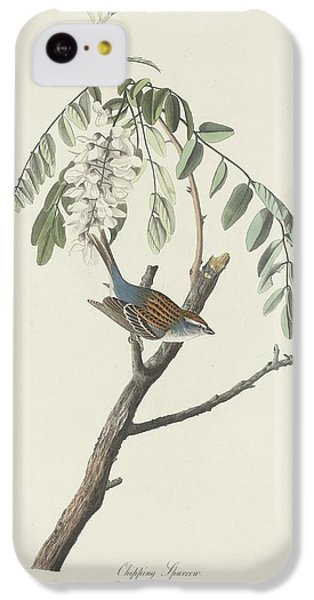 Chipping Sparrow IPhone 5c Case by Rob Dreyer
