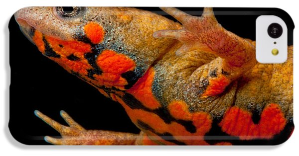 Chuxiong Fire Belly Newt IPhone 5c Case by Dant� Fenolio