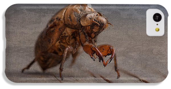 Cicada Shell IPhone 5c Case