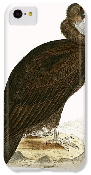 Cinereous Vulture IPhone 5c Case by English School