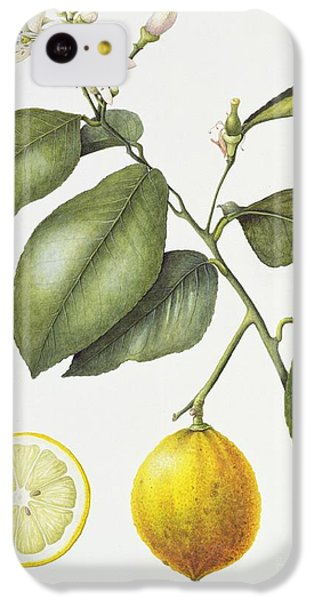Citrus Bergamot IPhone 5c Case
