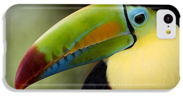 Toucan iPhone 5c Case - Close-up Of Keel-billed Toucan by Panoramic Images