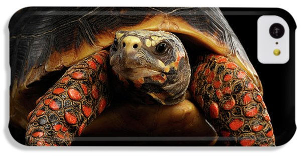Close-up Of Red-footed Tortoises, Chelonoidis Carbonaria, Isolated Black Background IPhone 5c Case
