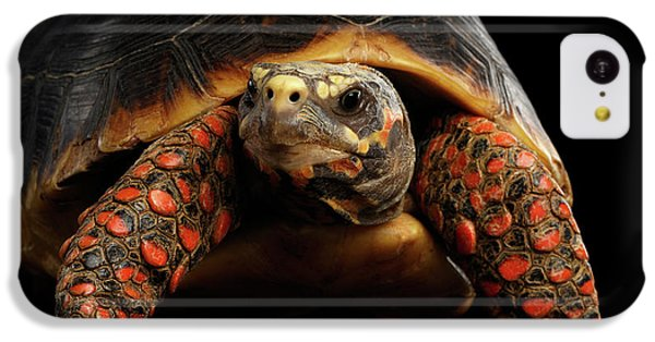 Close-up Of Red-footed Tortoises, Chelonoidis Carbonaria, Isolated Black Background IPhone 5c Case by Sergey Taran