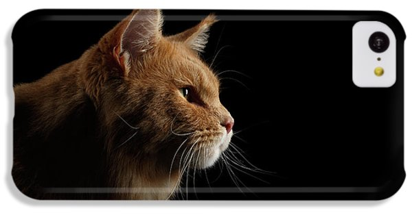 Cat iPhone 5c Case - Close-up Portrait Ginger Maine Coon Cat Isolated On Black Background by Sergey Taran