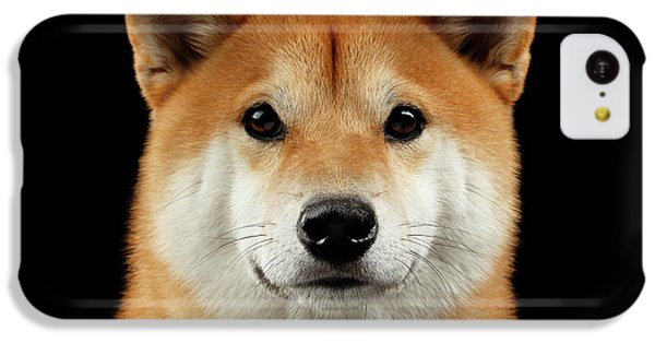 Close-up Portrait Of Head Shiba Inu Dog, Isolated Black Background IPhone 5c Case by Sergey Taran