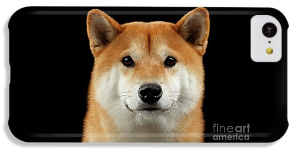 Close-up Portrait Of Head Shiba Inu Dog, Isolated Black Background IPhone 5c Case by Sergey Taran