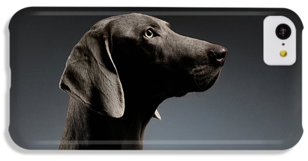 Dog iPhone 5c Case - Close-up Portrait Weimaraner Dog In Profile View On White Gradient by Sergey Taran