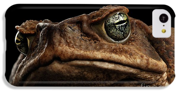 Closeup Cane Toad - Bufo Marinus, Giant Neotropical Or Marine Toad Isolated On Black Background IPhone 5c Case