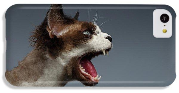Cat iPhone 5c Case - Closeup Devon Rex Hisses In Profile View On Gray  by Sergey Taran
