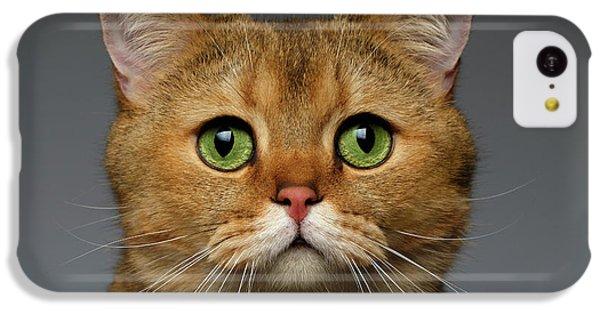 Closeup Golden British Cat With  Green Eyes On Gray IPhone 5c Case by Sergey Taran